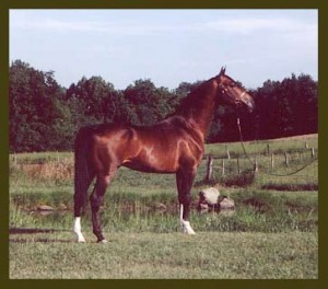 Picture of the Horse Canada